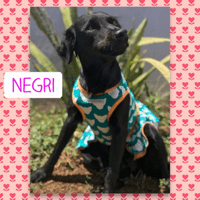negri pet of the week.